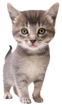kitty1.png